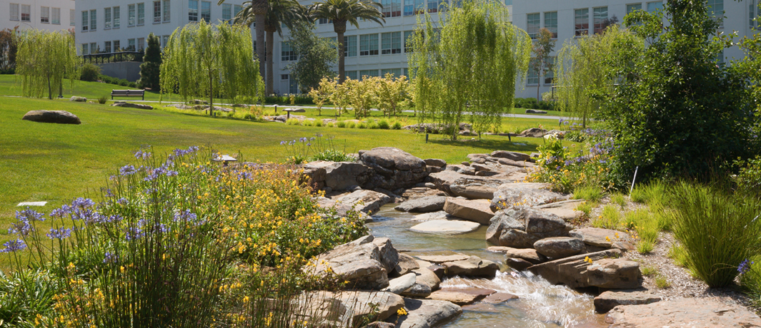 Corporate Campuses Landscaping Experts