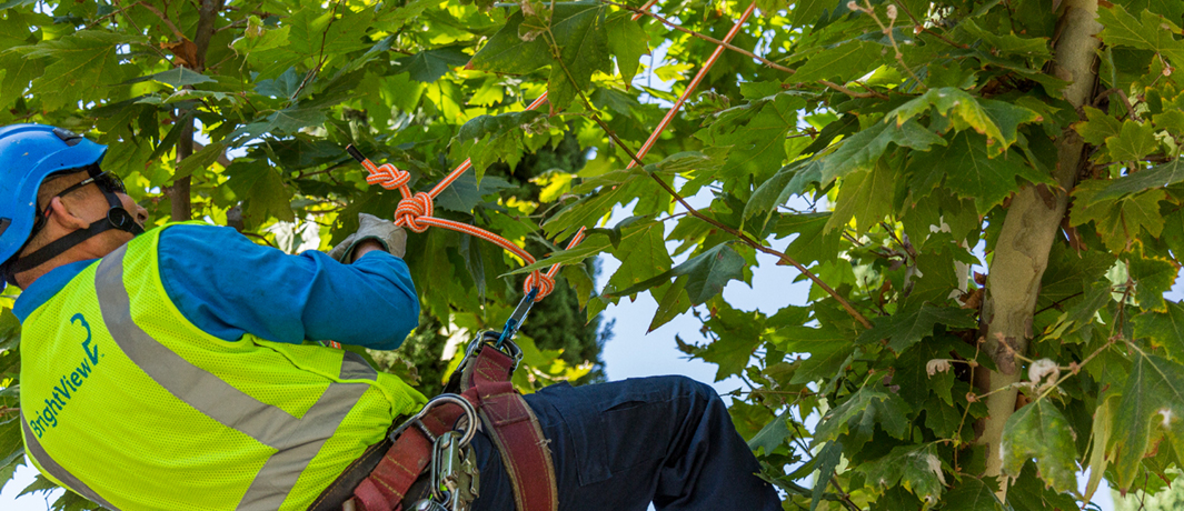 Tree Care Maintenance Professionals