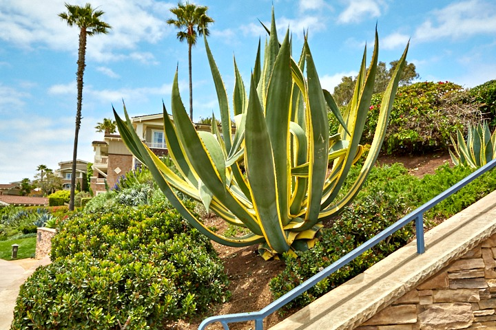 3 Reasons to Use Drought Tolerant or Native Plants | BrightView