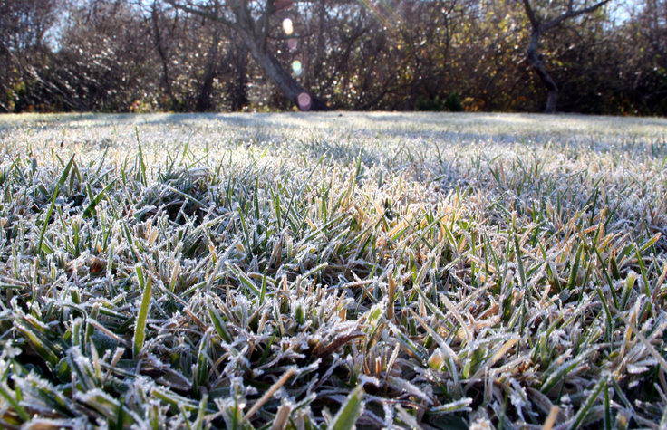 Frost Covered Lawn