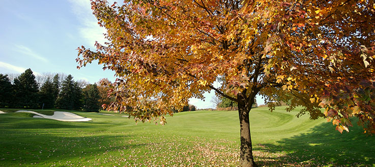 Golf course with tree of golden leaves