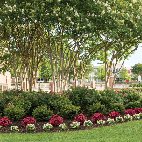 Trees & shrubs Need Plant Health Care too