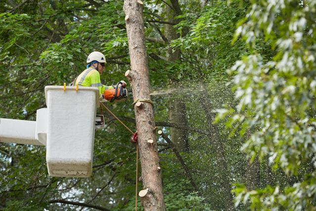 McAllen, TX Tree Care Services