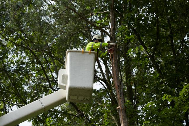 Tree Care In New Brunswick, NJ