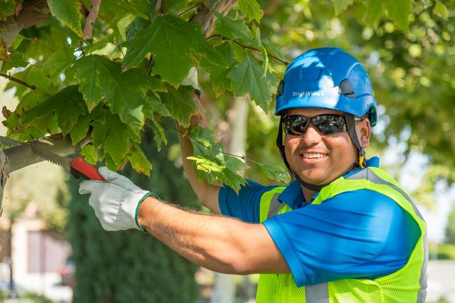 Commercial Tree Care in Boston, MA