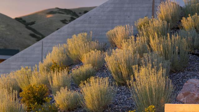 Utah Museum of Art Landscape Development