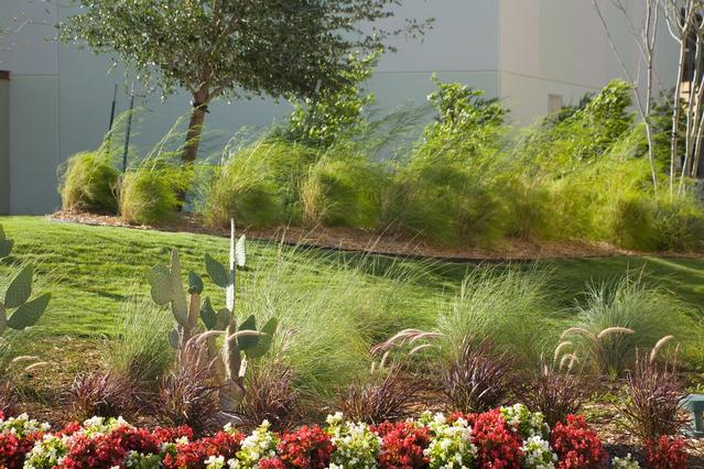 Round Rock, TX Landscape Maintenance Services