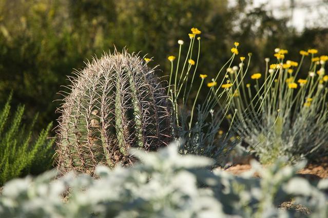 Mesa Az Landscape Services