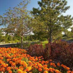 Commercial Landscaping Landscape Services Amp Maintenance