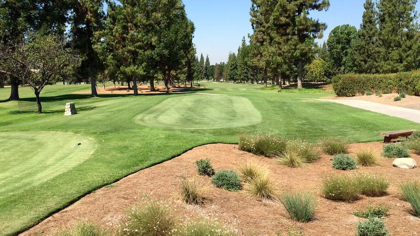 golf course greens bordered by low-water use plants