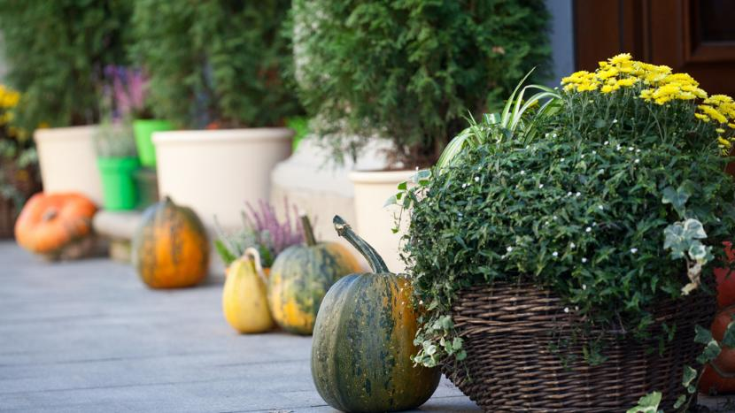Fall Planters