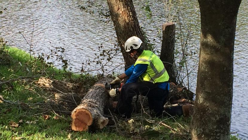Man cutting tree limb during storm clean-up