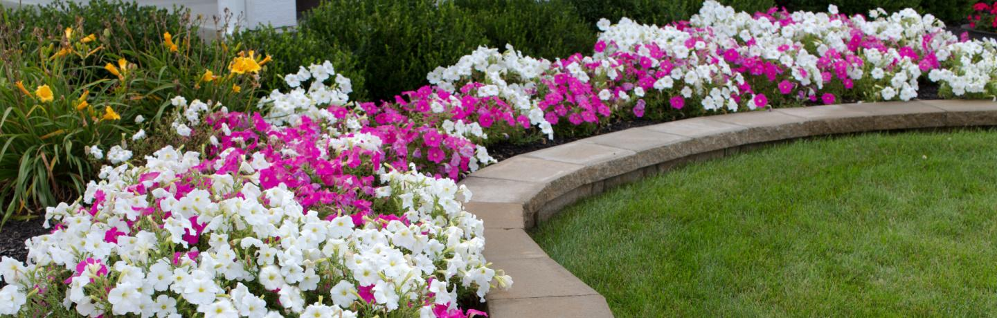 Add a Burst of Color with Summer Annuals