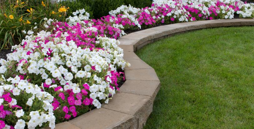 Add Summer Annuals for a Burst of Color to your Property