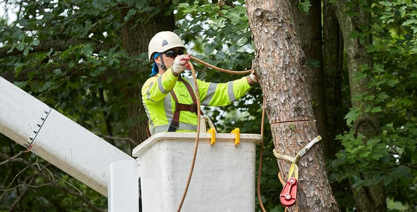 Licensed Tree Care